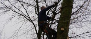 Why There Is A Need For An Arborist