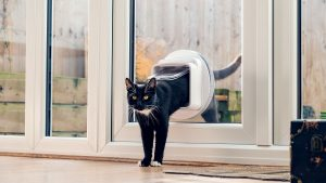 Top 6 Home Additions You Need For Your Feline Friend