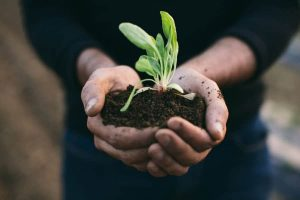 Lifestyle Changes Anyone Can Do To Live An Eco-Friendly Life