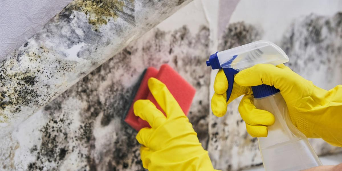 Restore Your Home Fast After Flooding