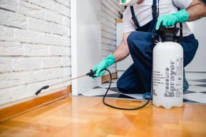 Get rid of stubborn pests and protect your home